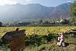 Italy, South tyrol (Alto Adige) Caldaro at the South Tyrolean Wine Route