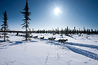 Jeff King on the trail heading into the 1/2 way checkpoint of Cripple during the 2010 Iditarod