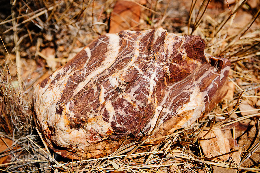 Image Ref: CA534<br /> Location: Ormiston Gorge, Northern Territory<br /> Date of Shot: 16.09.18