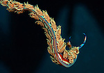 The Never Ending Story, Flying Dragon, nudibranch;Pteraeolidia ianthina