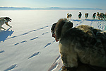 A dog team pulls a hunter and his passenger across the ice near Qaanaaq, Greenland. Dog teams are still the primary means of transportation in the small Inuit communities around Qaanaaq but their future is threatened by a changing climate - which shows itself in warming temperatures, earlier summers, later winters, and shrinking and thinning sea ice threatening the livelihoods and traditions of some of the last subsistence hunters on Earth, the Polar Inuit communities of far Northwest Greenland.