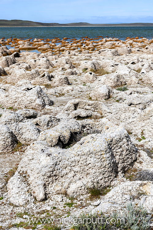 Thrombolites and stromatolites or stromatoliths - layered mounds of sedimentary rock, originally formed from the growth of layer upon layer of cyanobacteria. On the shoreline of Lago (Lake) Sarmiento on the outskirts of Torres del Paine National Park, Patagonia, Chile.