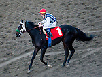 January 1, 2012.Bauble Queen ridden by Garrett Gomez coming back to the winner's circle after  winning the Robert J. Frankel Stakes  at Santa Anita Park, Arcadia, CA
