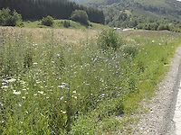 MT_LOCATION_30281