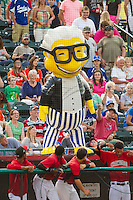 """""""Harry Canary"""" of the ZOOperstars! entertains the fans at the South Atlantic League game between the Charleston RiverDogs and the Hickory Crawdads at L.P. Frans Stadium on May 24, 2014 in Hickory, North Carolina.  The Crawdads defeated the RiverDogs 7-3.  (Brian Westerholt/Four Seam Images)"""