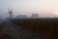 Europe/France/Pays de la Loire/Maine-et-Loire/Turquant : AOC Saumur-Champigny, le vignoble et le moulin de l'Herpinière