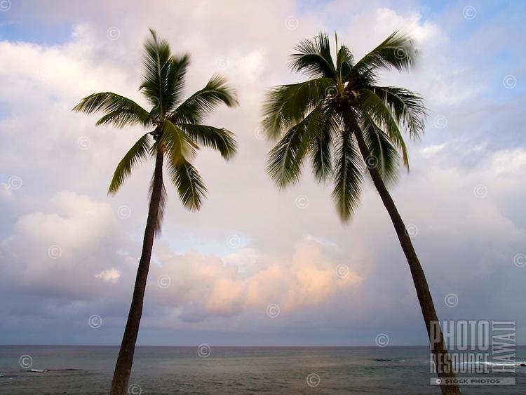 A quiet sunrise behind two palm trees at Honl's Beach, Kailua-Kona, Big Island.
