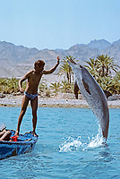 Man interacting with and feeding wild Bottlenose Dolphin, Tursiops truncatus, Nuweiba, Egypt, Red Sea., Northern Africa