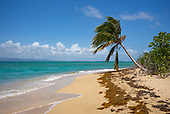 Vieques, Puerto Rico<br /> September 7, 2021<br /> <br /> A beach on western Vieques island.