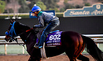 October 28, 2019 : Breeders' Cup Turf Sprint entrant Eddie Haskell, trained by Mark Glatt, exercises in preparation for the Breeders' Cup World Championships at Santa Anita Park in Arcadia, California on October 28, 2019. John Voorhees/Eclipse Sportswire/Breeders' Cup/CSM