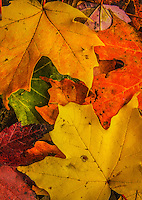 3 Big Seasons - Spring, Fall, Winter