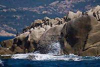 Europe/France/2A/Corse du Sud/ Murtoli: le Golfe de Roccapina-Les Cormorans sur les rochers