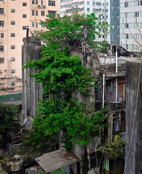 Hongkong, China, Asien, urbane Flora<br />  ***Keine Social_Media Nutzung***<br /> <br /> Engl.: Asia, China, Hong Kong, urban flora, plant, tree, houses<br /> ***No social media use***
