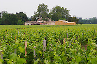 ???? a chateau in the background. Is is La Dominique? Do you know?  Saint Emilion  Bordeaux Gironde Aquitaine France