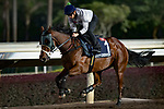 SHA TIN,HONG KONG-DECEMBER 08 : Beauty Generation,trained by John Moore,exercises in preparation for the Hong Kong Mile at Sha Tin Racecourse on December 8,2017 in Sha Tin,New Territories,Hong Kong (Photo by Kaz Ishida/Eclipse Sportswire/Getty Images)