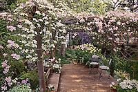 Clematis vines on cottage garden arbor over wooden deck in California garden