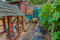 Backyard sustainable system: chickens, compost bin, rainwater cistern for rain water capture, mulched composted edible garden with berries