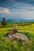 Summer vista along Engine Gap, Roan Highlands, Tennessee and North Carolina