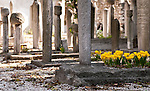 Cemetery Flowers - Yellow flowers on a grave in the cemetery at Kara Ahmet Pasa Mosque, Topkapi, Istanbul, Turkey