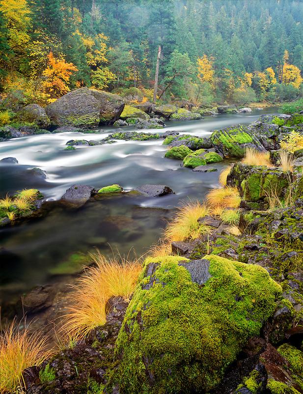 Fall colors along North Fork Umpqua River. Oregon.