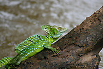 Costa Rican Reptiles