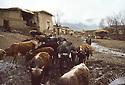 Iran 1982.In the village of Engawe