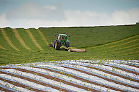 Mowing grass with a John Deere tractor with maize grown under plastic in the foreground, Mouswald, Dumfries.
