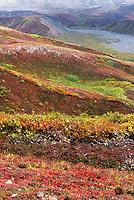 Fresh snow, bearberry, dwarf birch, blueberry and autumn tundra, Denali National Park, Alaska.