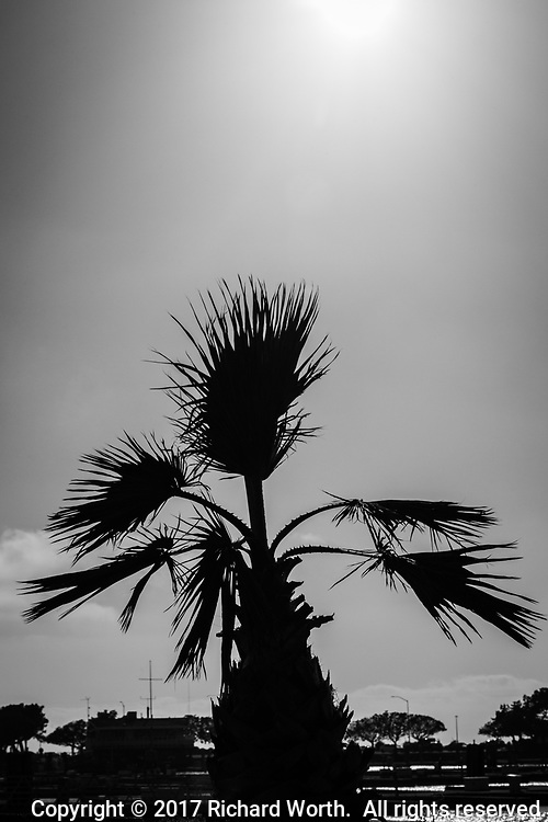 With imagination, this potted palm could be a multi-armed monster from a low-budget horror movie.