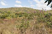 Mato Grosso, Brazil. Cerrados vegetation.