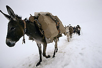 Donkey's charge with oil metal container, wheat, tea and other elementary food going to the Bamiyan valley in a snowstorm at 3352 meters high on the Wonay Pass in the Baba Range who culminate at 5100 meters high.