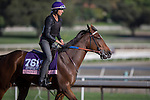 OCT 27 2014:Dantee, trained by Keith Desormeaux, exercises in preparation for the Breeders' Cup Juvenile Fillies at Santa Anita Race Course in Arcadia, California on October 27, 2014. Kazushi Ishida/ESW/CSM