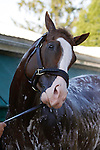 May 17, 2013, morning activities at Pimlico on Friday before the Preakness. Preakness contender Will Take Charge gets a bath after his gallop at Pimlico Race Course in Baltimore, MD. (Joan Fairman Kanes/Eclipse Sportswire)