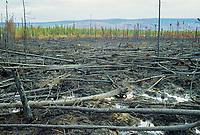 Forest fire burn along the James Dalton highway, Alaska