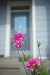 Pink Flowers and Blue Home
