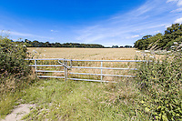 Locked farm gates leading to wheat field - Norfolk, July