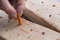 Mit scharfem Bohrer werden Löcher in Hartholz, Längsholz, Holz gebohrt, Löcher, Loch bohren. Schritt 2: Löcher werden mit aufgerolltem Schmirgelpapier, Schleifpapier glatt und frei von Fasern und Splittern geschliffen. Wildbienen-Nisthilfen, Wildbienen-Nisthilfe selbermachen, selber machen, Wildbienenhotel, Insektenhotel, Wildbienen-Hotel, Insekten-Hotel