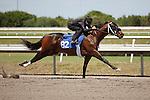 #82Fasig-Tipton Florida Sale,Under Tack Show. Palm Meadows Florida 03-23-2012 Arron Haggart/Eclipse Sportswire.
