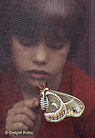 LE26-060z   Cecropia Moth - boy touching adult moth through screen - Hyalophora cecropia
