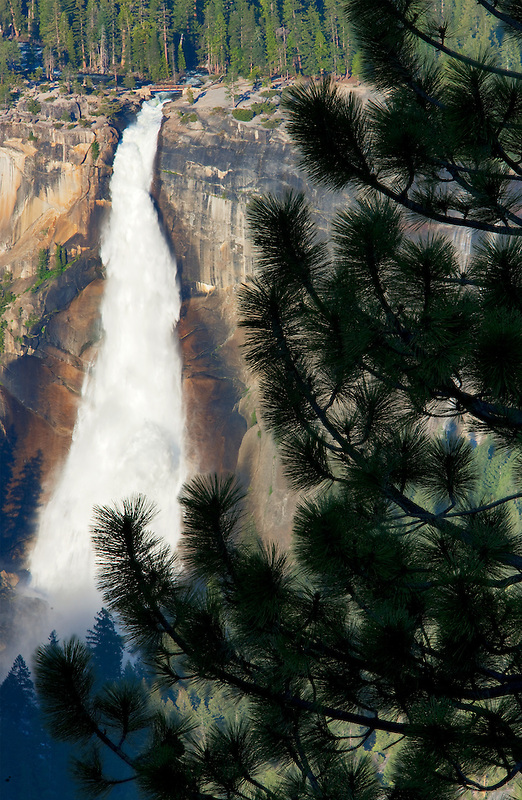 Nevada falls and pine tree as seen from Glacier Point. Yosemite National Park, California