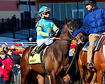 OZONE PARK, NY - JANUARY 30:  King Kranz #4 with Cornelio Velasquez in post parade on Withers Stakes Day at Aqueduct Race Track in Ozone Park, New York on January 30, 2016. (Photo by Sue Kawczynski)
