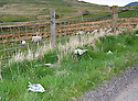 DISCARDED LITTER ON THE B822 FROM FINTRY TOWARDS LENNOXTOWN.