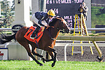Hillstar (GB)(7) with Jockey Ryan L. Moore aboard runs to victory at the Pattison Canadian International Stakes at Woodbine Race Course in Toronto, Canada on October 19, 2014.