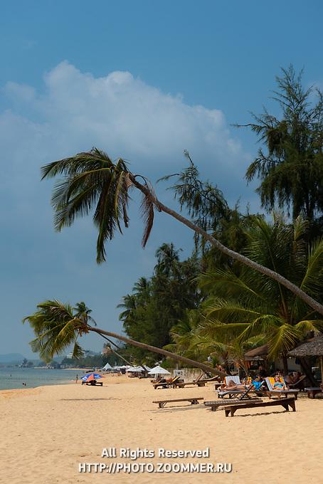 Palm treen over Long Beach, Phu Quoc, Vietnam