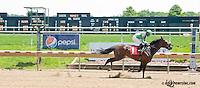 Mineswept winning at Delaware Park on 6/19/13
