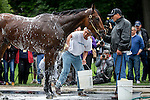 JUNE 5, 2015: American Pharoah, trained by Bob Baffert, gets a bath after exercising in preparation for the 147th running of the Belmont Stakes at Belmont Park in New York, NY. Jon Durr/ESW/CSM