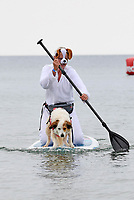 """BNPS.co.uk (01202 558833)<br /> Pic: ZacharyCulpin/BNPS<br /> <br /> Pictured: Lizzie Wilkkinson with her Springer-Collie called """"Diogie""""<br /> <br /> Putting their best paw forward hoping to ride the wave of success - Competitors and their dogs take part in the annual Dog Surfing championships. <br /> <br /> The event known as The 'dogmasters' took place today on Bournemouth beach in front of packed crowd, it's the country's only dog surfing and paddleboard championship."""