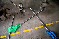 "The ""monkey honor guard"" waits to begin a show for tourists at Monkey Island near Lingshui, Hainan, China."
