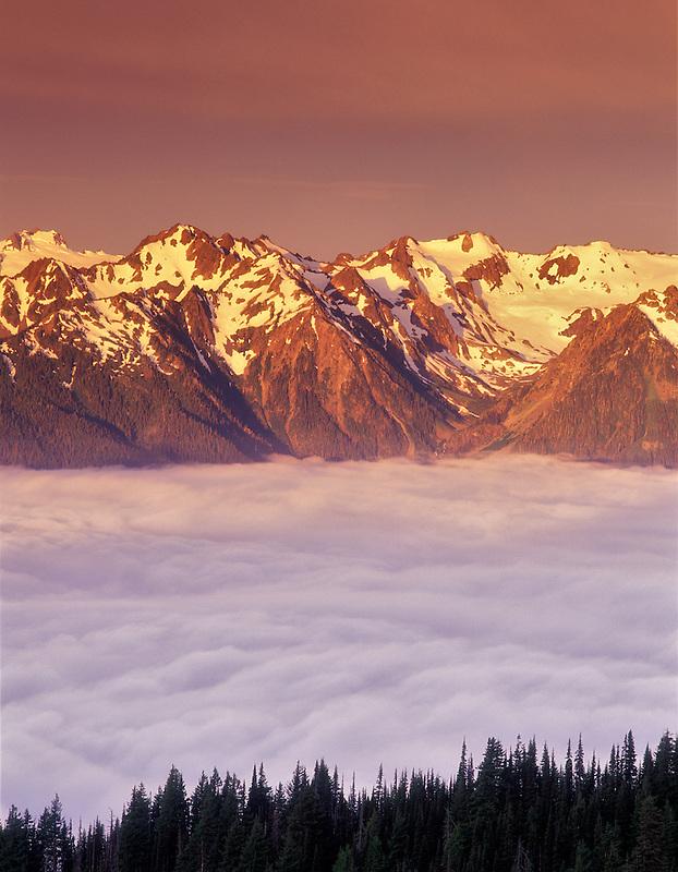 Mount Olympus and fog at sunrise. Olympic National Park, Washington.