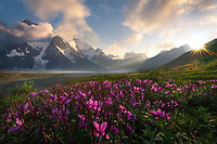 Beams of light shoot across a hazy valley in the wilderness of the eastern Alaska Range, complemented here by flowers and a beautiful sunset.